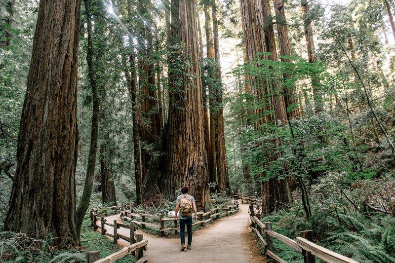 Muir Woods trails